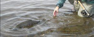 El miedo de los peces sabe a dulce