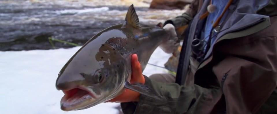 Pescado en la Red: A Fly Fishing Journey Through Labrador