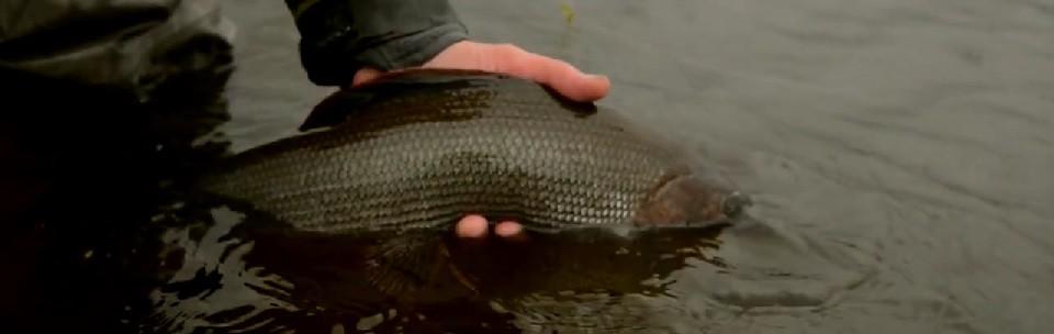 Pescado en la Red: Lapland in waders 2013