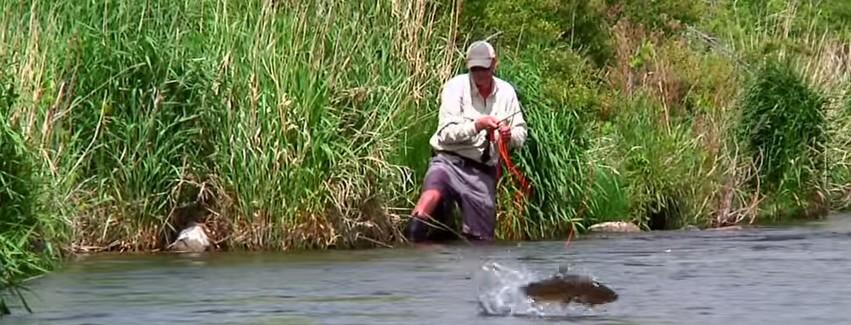 En este momento estás viendo Pescado en la Red: Sky High Salmonfly by Todd Moen – Deschutes River Fly Fishing