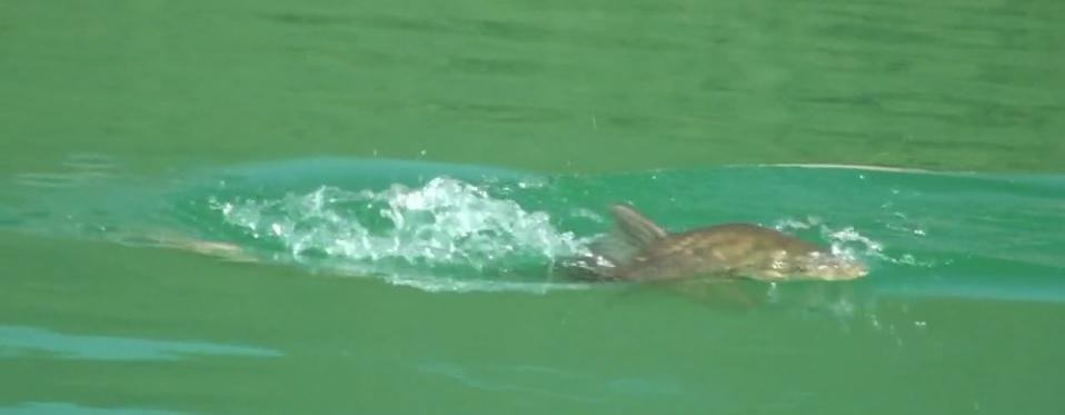 Pescado en la Red: Carps on fly