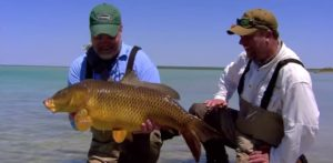 Pescado en la Red: Amazing Fly Fishing Carp Action!