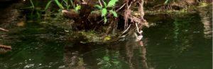 Lee más sobre el artículo Pescado en la Red: Hungry trout