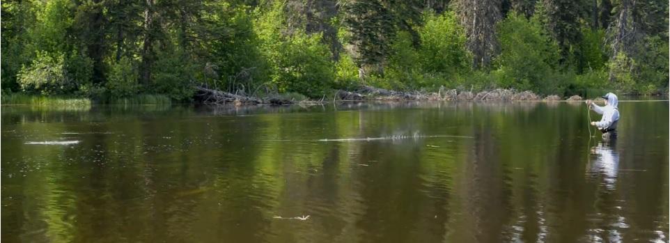 Pescado en la Red: The Joy is in the Rise