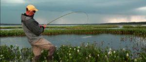 Pescado en la Red:Lightning