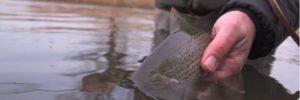 Pescado en la red: sociālis