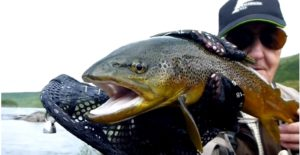 Pescado en la Red: El sueño Lapón