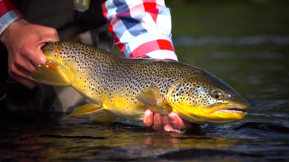 Pescado en la Red: ARCTICSILVER IF4 2014