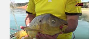 Lee más sobre el artículo Pescado en la Red: Fly Fishing, moscas que pescan (Carpas)