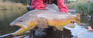 Pescado en la Red: Fly Fishing Colorado
