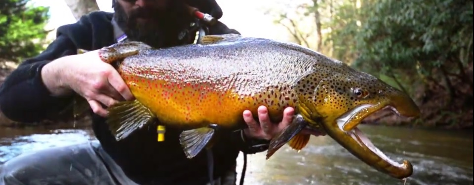 Pescado en la Red: The 5wt Chronicles: Georgia Brown (Fly Fishing for big Rainbows and Brown Trout)