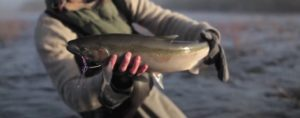 Pescado en la Red: fly fishing collaborative