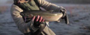 Lee más sobre el artículo Pescado en la Red: fly fishing collaborative