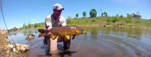 Pescado en la Red: Carp Fly Fishing – South Platte River Denver