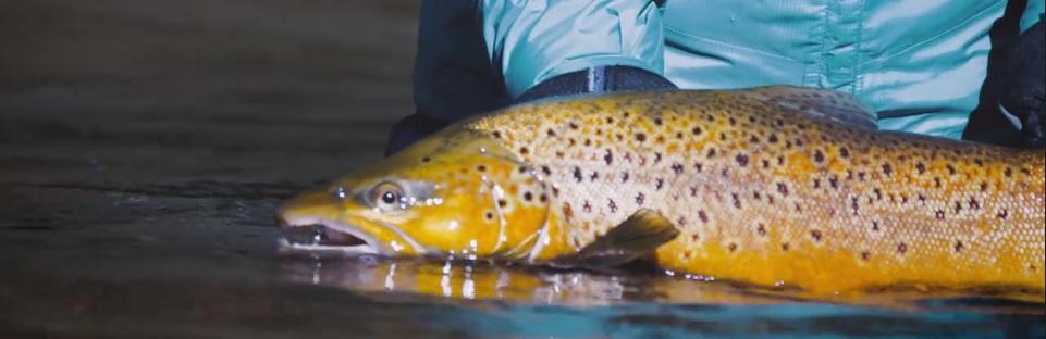 Pescado en la Red: Fly-Fishing in the Snowy Mountains