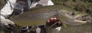 Pescado en la Red: Backcountry – South island: early Season Fly Fishing Teaser