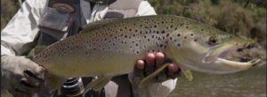 Lee más sobre el artículo Pescado en la Red: Backcountry – South island: early Season Fly Fishing Teaser