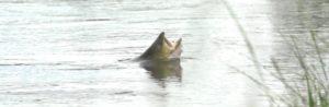 Lee más sobre el artículo Pescado en la Red: Damsels in Distress