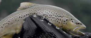 Lee más sobre el artículo Pescado en la Red: Fly Fishing / Patagonia, Chile