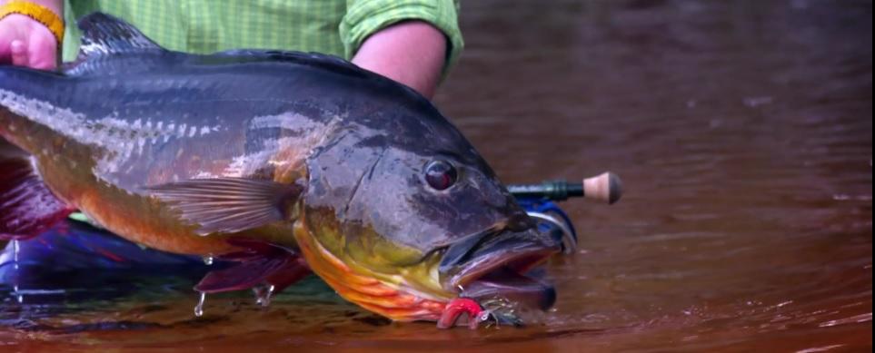 Pescado en la Red: Río Marié 2017 Season