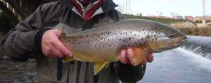 Sorteo curso gratuito de pesca a mosca; y llegó el día