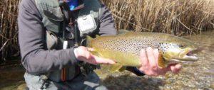 Salida guiada y curso intensivo de pesca a mosca; Albert Ferrer