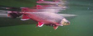 Pescado en la Red: The Field Coffe Diary