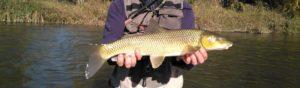 En busca de escamas doradas; pescador cazador…?