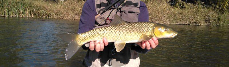 En este momento estás viendo En busca de escamas doradas; pescador cazador…?