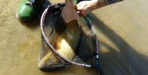 El pescador y el uso de la sacadera.
