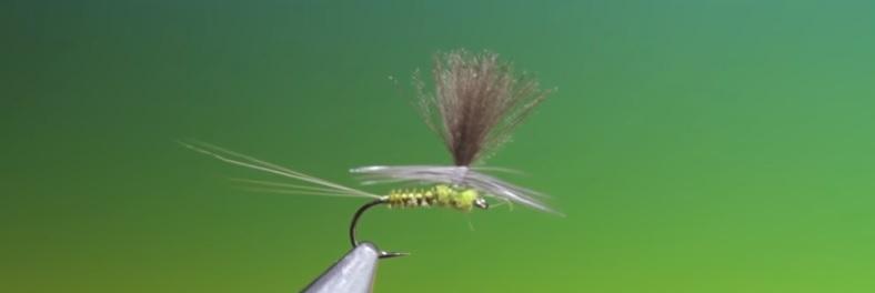 Vídeo atado mosca: Tying a Para Dun BWO with Barry Ord Clarke