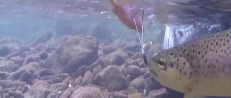 Herramienta para soltar peces sin tocarlos, by Marc Petitjean (MP-Releasre)