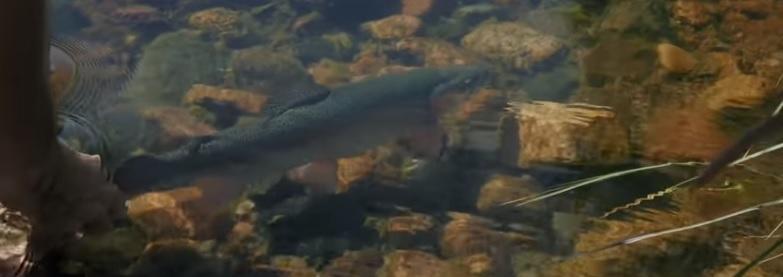En este momento estás viendo Video. Sight Fishing in Norrby