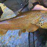 Pescando por Alfarràs… día de tabardos